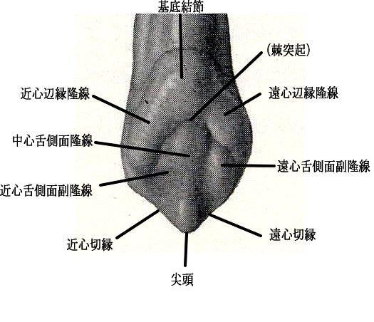 ボノボの画像 p1_12